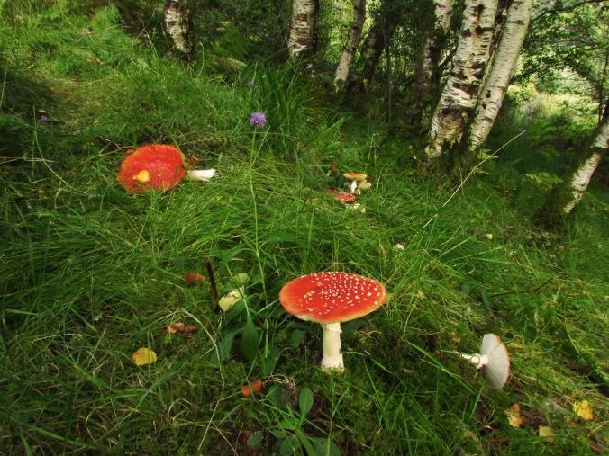 funghi rossi.jpg